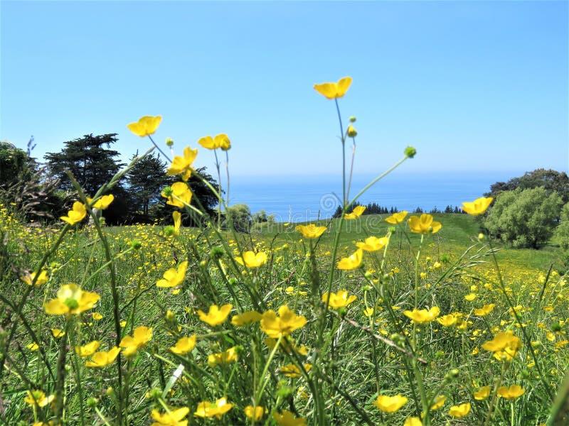 Landschappen met gele bloem in de voorgrond royalty-vrije stock afbeelding