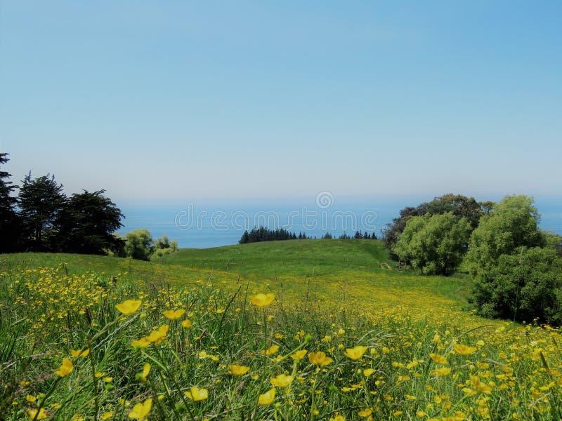 Landschappen met gele bloem in de voorgrond royalty-vrije stock afbeeldingen
