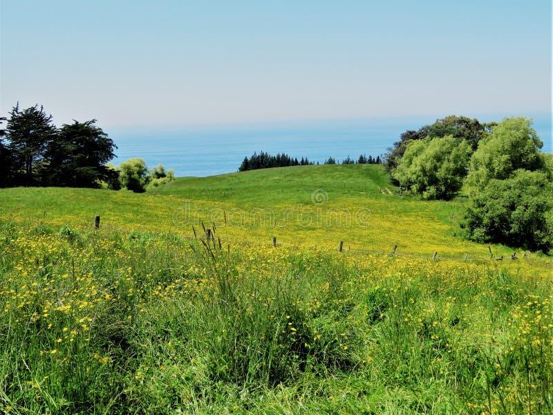 Landschappen met gele bloem in de voorgrond royalty-vrije stock foto