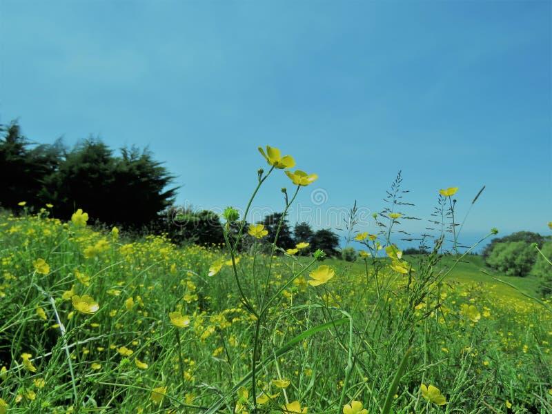 Landschappen met gele bloem in de voorgrond stock afbeeldingen