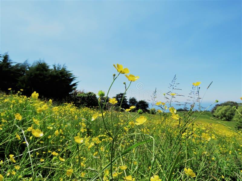 Landschappen met gele bloem in de voorgrond stock fotografie