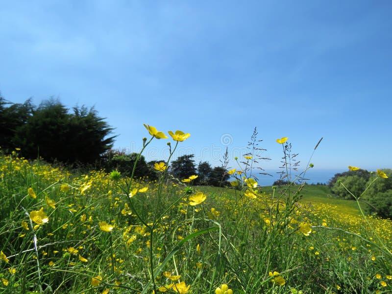 Landschappen met gele bloem in de voorgrond royalty-vrije stock fotografie