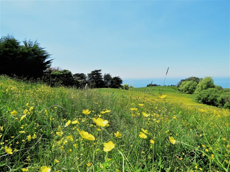 Landschappen met gele bloem in de voorgrond royalty-vrije stock foto's