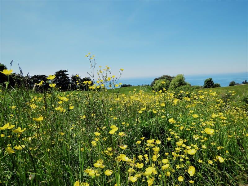 Landschappen met gele bloem in de voorgrond stock foto's