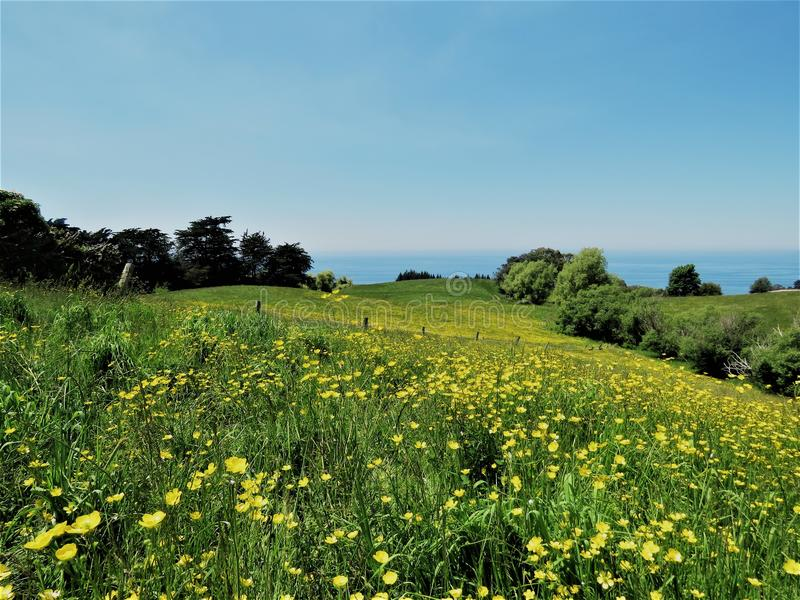 Landschappen met gele bloem in de voorgrond stock afbeelding
