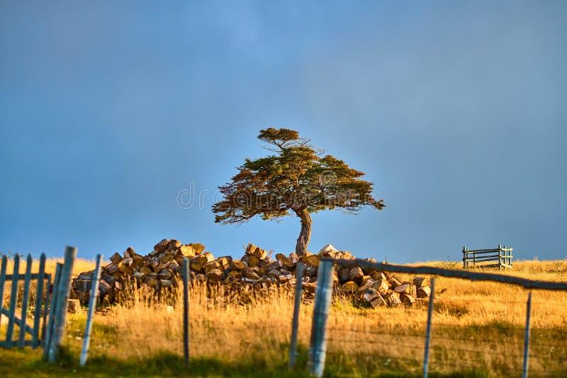 Landschappen naast een kleine regeling op Tierra del Fuego dichtbij Ushuaia Argentijns Patagonië in de Herfst royalty-vrije stock afbeelding