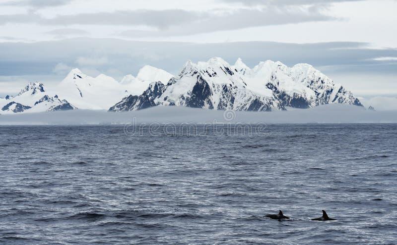 Landschappen van Antarctica stock foto