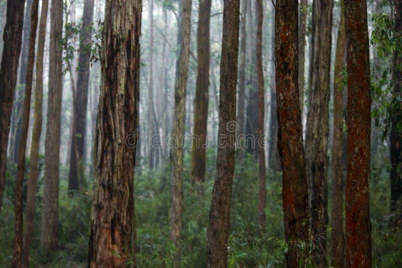 Landschappen van Australië stock foto's