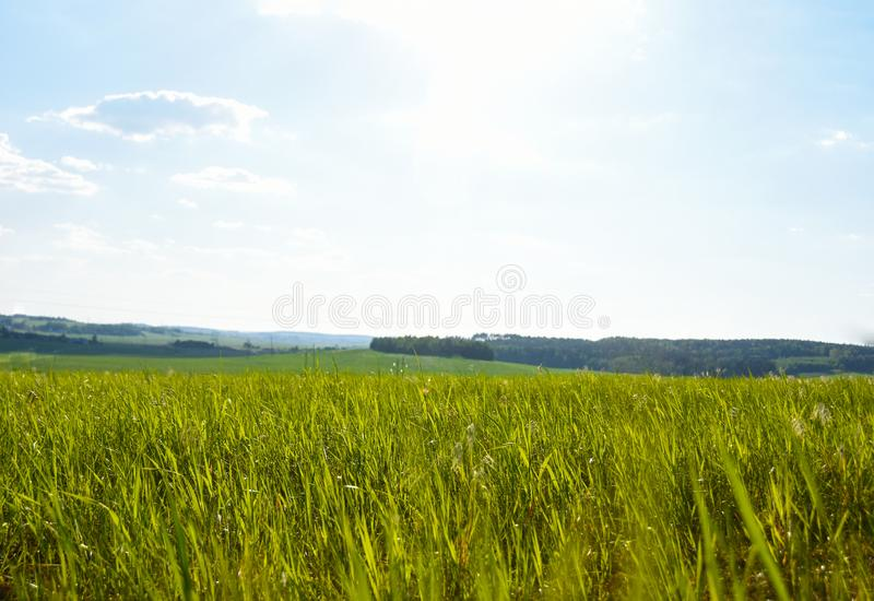 Landschaps groen gras op het gebied in de zon, achtergrond, de zomer stock afbeeldingen