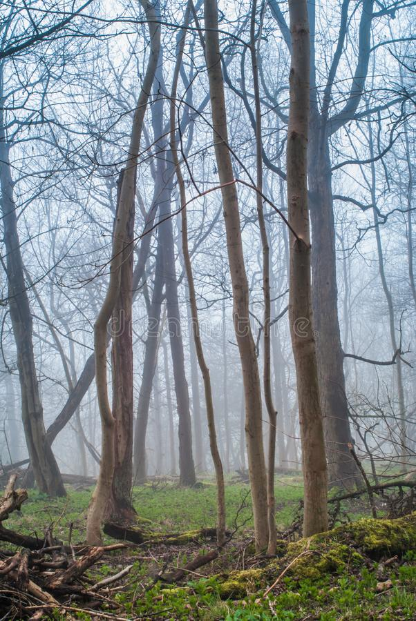 Landschaps mistig bos royalty-vrije stock afbeelding