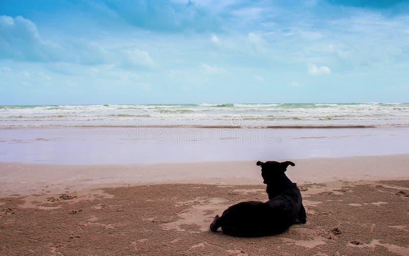 Landschaps tropische overzees op blauwe hemelachtergrond en silhouetrug van enige hondzitting op zandig strand royalty-vrije stock foto