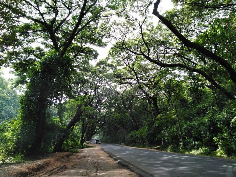 Landschapsbeeld van groene weg onder bomen royalty-vrije stock fotografie
