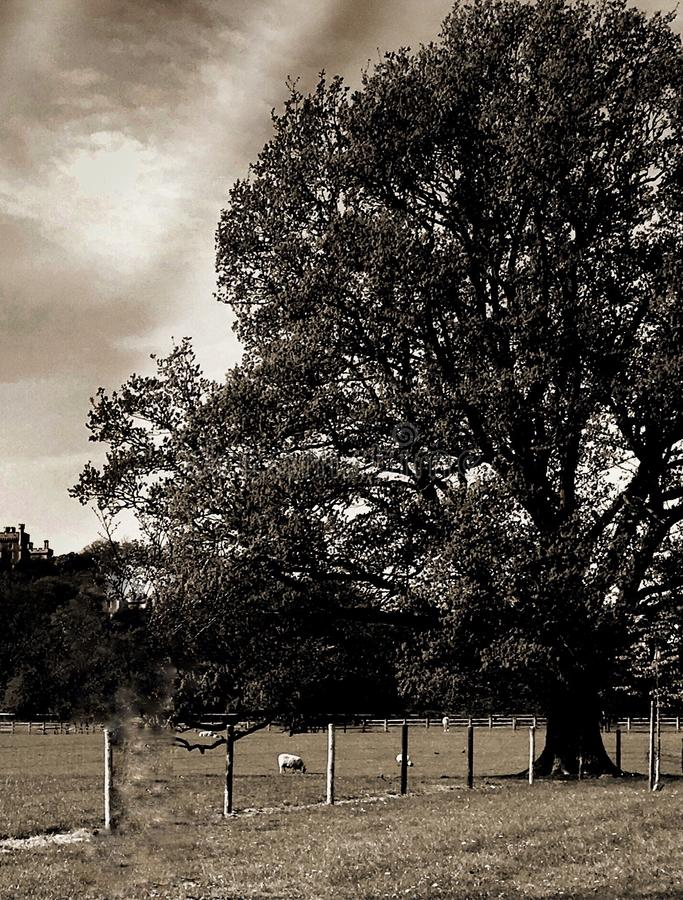 Landschapsboom stock fotografie