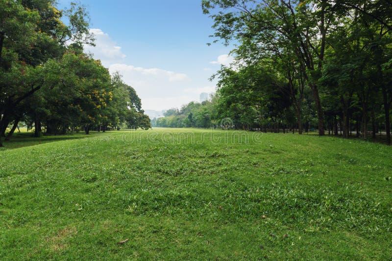 Landschapsgazon in het park royalty-vrije stock afbeeldingen