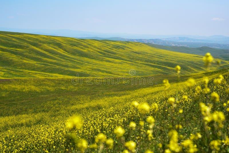 Landschapsheuvels met gele bloemen stock foto