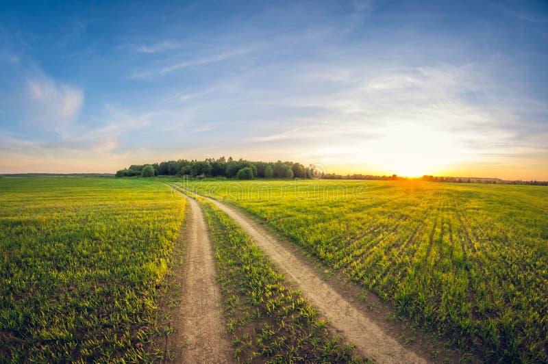 Landschapslandweg op een het zaaien gebied bij zonsondergang royalty-vrije stock afbeelding