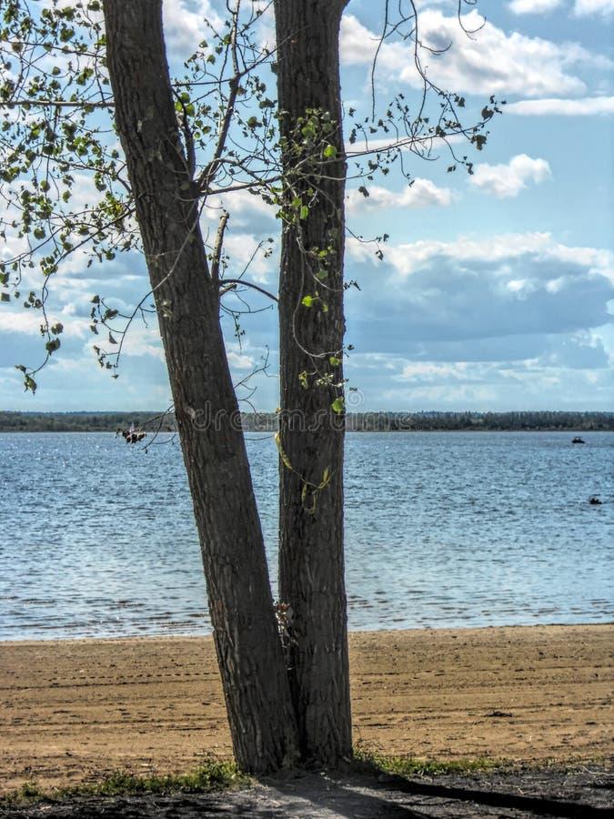 Landschapsmeer met boom op strand stock afbeelding
