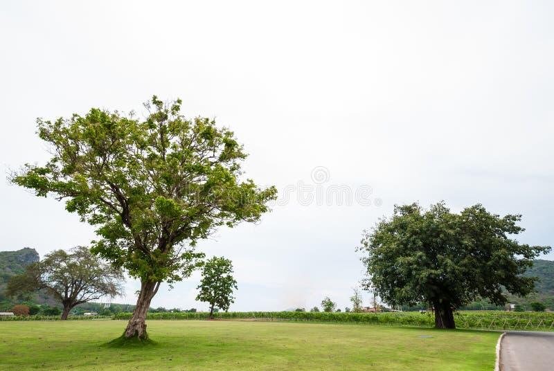 Landschapsmening, boom in voor en witte hemel op achtergrond stock fotografie