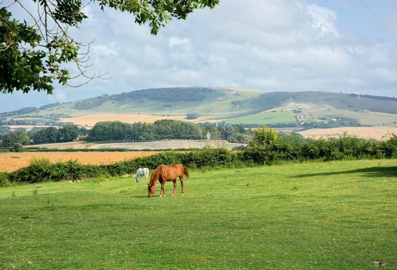 Landschapsmening met het weiden van paarden in voorgrond royalty-vrije stock foto's