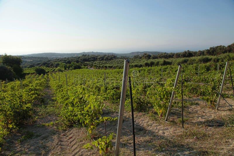 Landschapsmening van een wijngaard en groene heuvels in Kreta, Griekenland stock foto