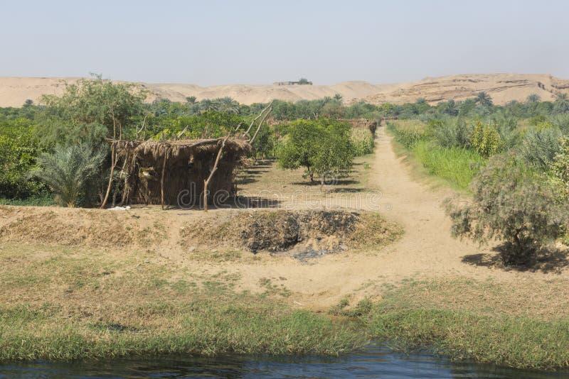 Landschapsmening van grote boomgaardaanplanting in Egypte met landelijke landbouwgrond royalty-vrije stock foto