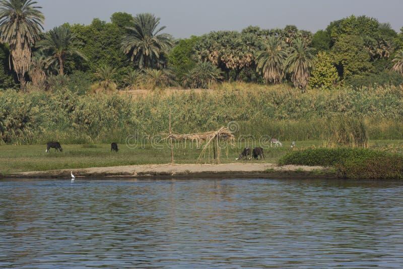 Landschapsmening van grote rivier Nijl in Egypte met landelijke landbouwgrond stock afbeeldingen