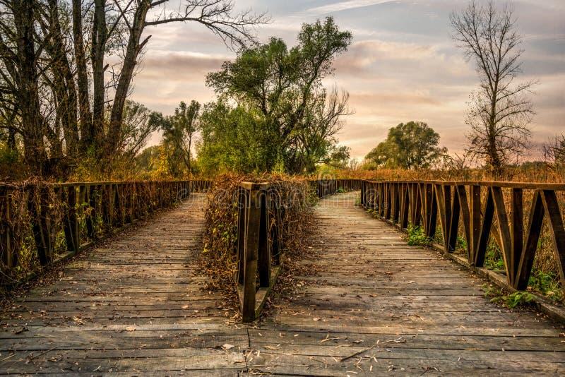 Landschapsmening van het houten weg verdelen in twee richtingen stock fotografie