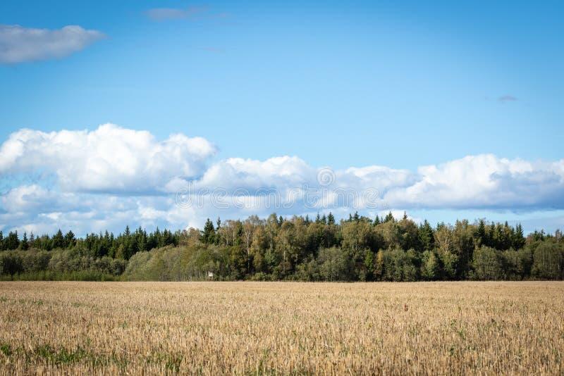 Landschapsmening van landbouwgebied met bos en heldere hemel op de achtergrond stock afbeeldingen