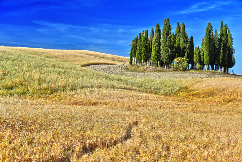 Landschapsmening van Val d& x27; Orcia, Toscanië, Italië stock fotografie