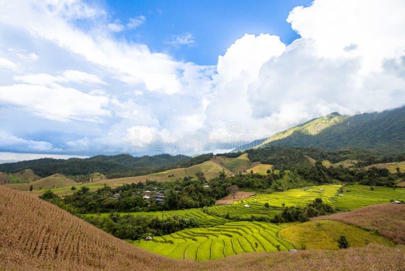 Landschapspadieveld op de heuvel stock foto