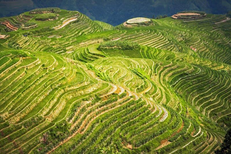 Landschapspadievelden op terrasvormig De Backbone van de de Terrassendraak van de Longjirijst in Longsheng China stock afbeelding