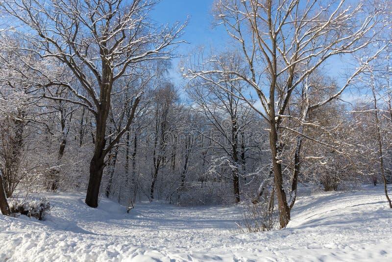 Landschapsravijn dat met oude bomen in de Botanische tuin van Moskou wordt overwoekerd Bomen in sneeuw De winter stock foto's