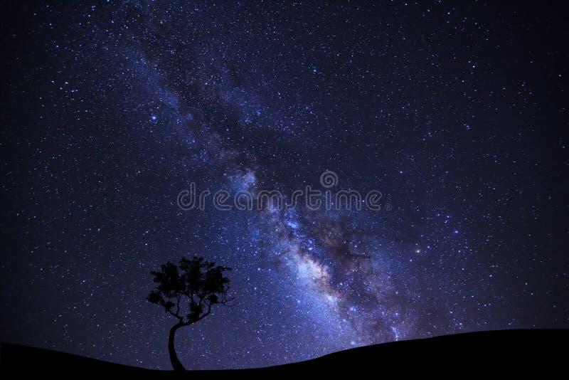 Landschapssilhouet van boom met melkachtige maniermelkweg en ruimte dus royalty-vrije stock foto's