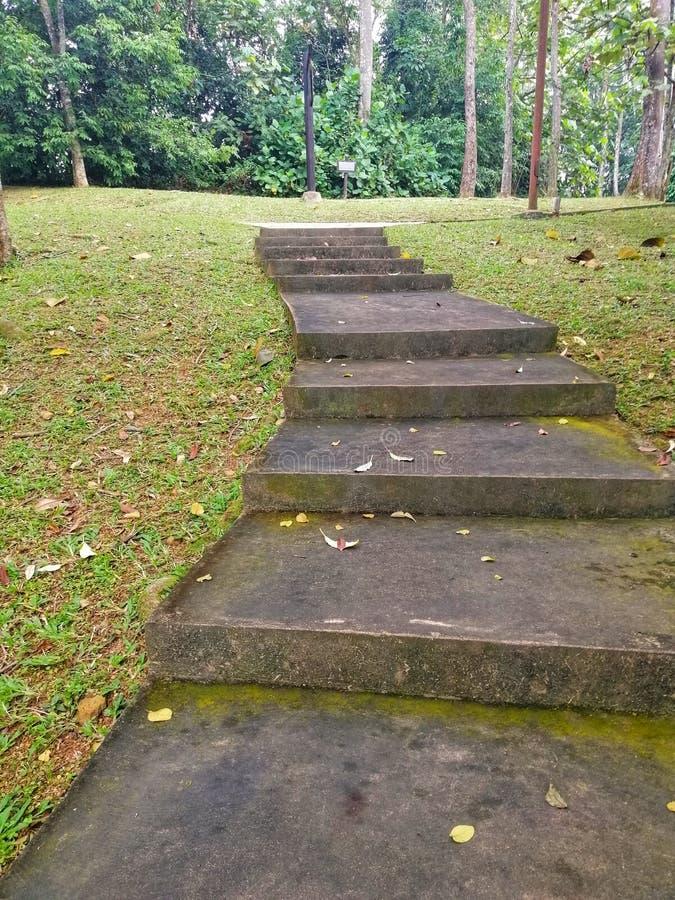 Landschapsweergave van het looppad in Taman Wetland Putrajaya Maleisië, een beroemd recreatiepark in Putrajaya stock fotografie