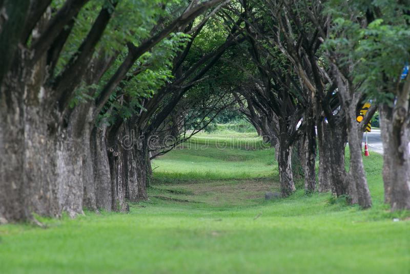 Landscpare naturliga träd och gröna gräs arkivfoton