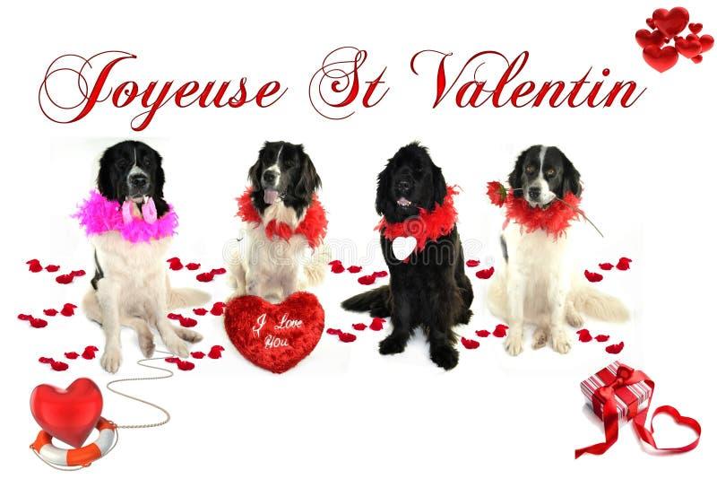 Landseer för romantiker för valentin för st för förälskelse för hund för Terre neuvenewfounland arkivfoto