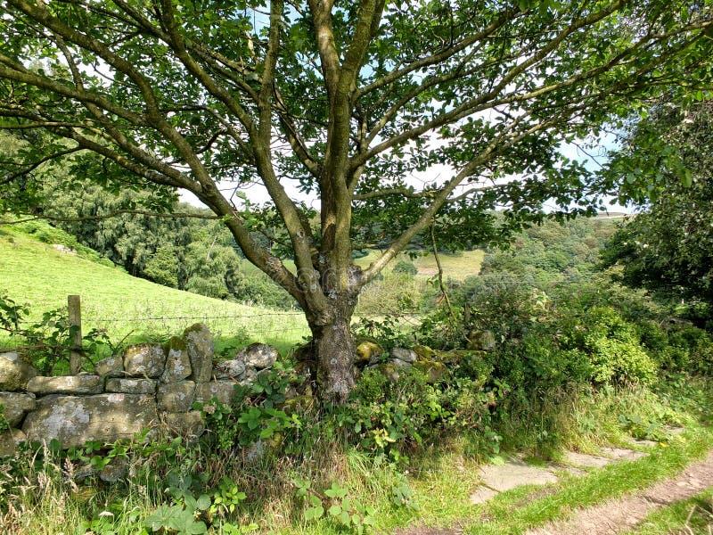 Landsgränd med väggen och trädet för torr sten arkivfoton
