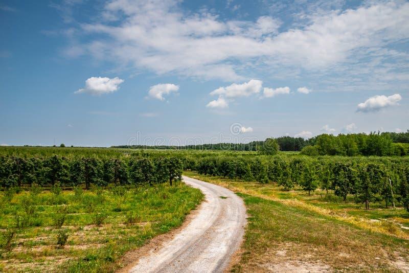 Landsgrusväg i Polen amongapplefruktträdgårdar i juli, innan att skörda tid Blått tonad molnig himmel med den gröna blandade skog arkivbilder