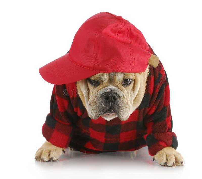 landshund royaltyfri fotografi
