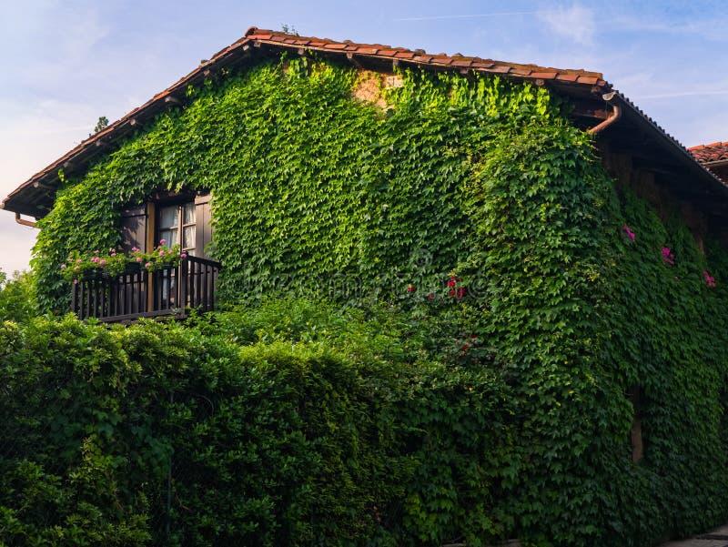 Landshus som täckas av murgrönan royaltyfri fotografi