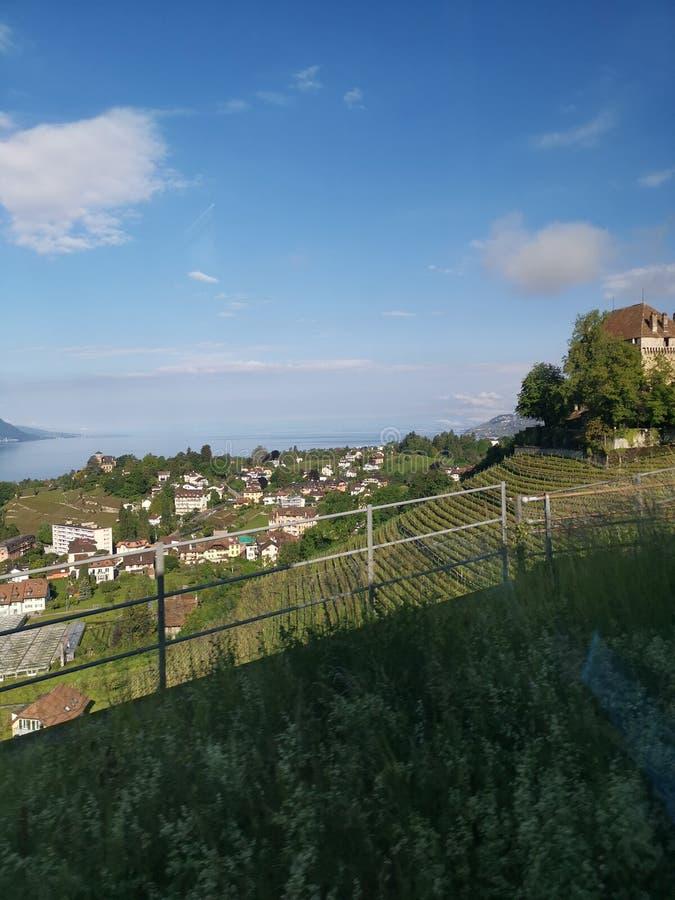 Landskap över vingård och tornet av en castel i Schweiz royaltyfri fotografi