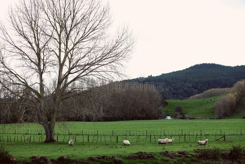 landskap royaltyfri bild