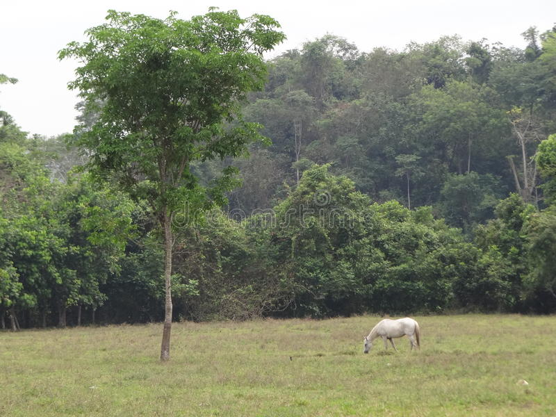 Landskap royaltyfri fotografi
