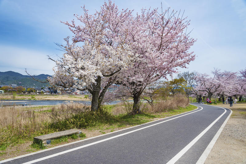 Landskap av Arashiyama, Kyoto, Japan arkivbild