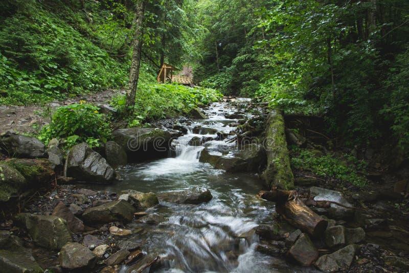 Landskap av bergen och bergfloden och den naturliga gröna skogen royaltyfria bilder