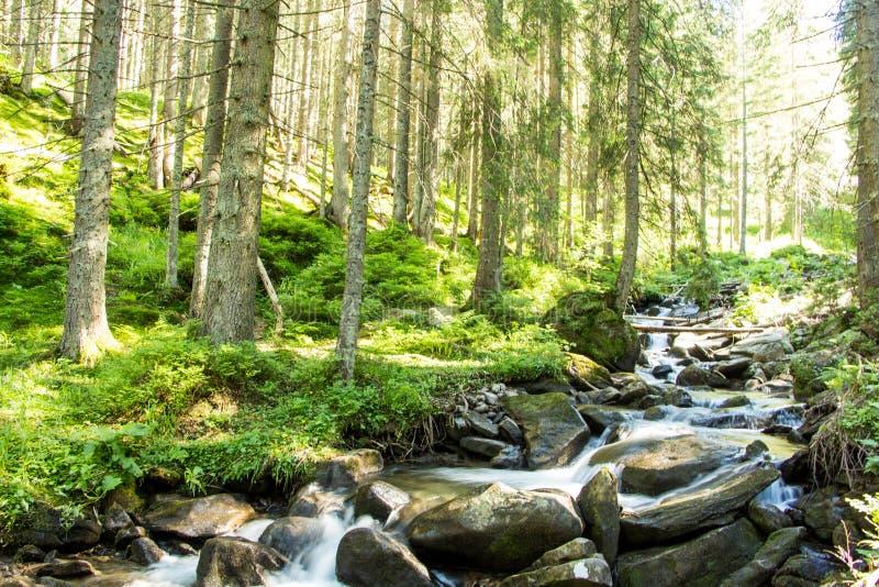 Landskap av bergen och bergfloden och den naturliga gröna skogen royaltyfria foton