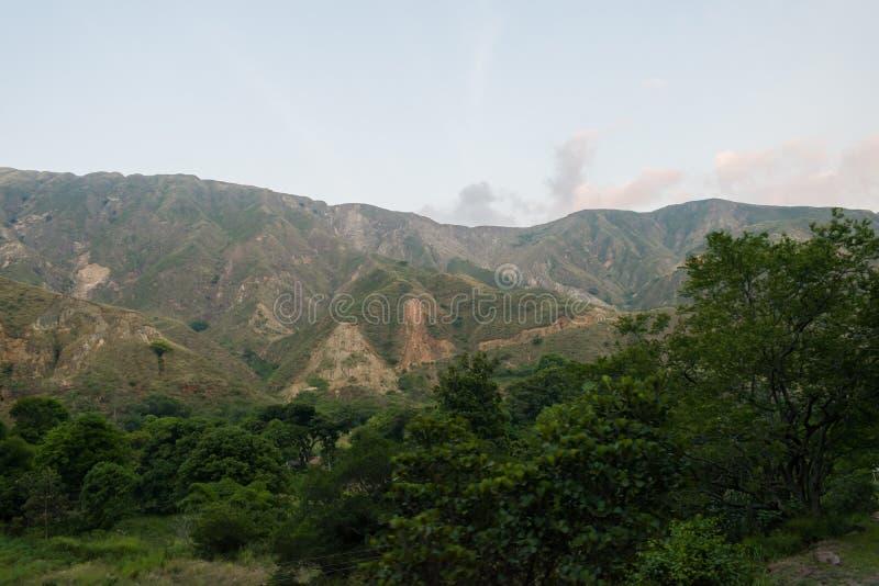 LANDSKAP AV BERGEN SOM OMGER CHICAMOCHA-KANJONEN I COLOMBIA MED GR?N VEGETATION OCH TR?D royaltyfri foto
