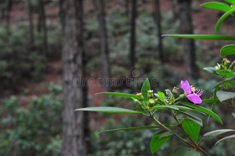 Landskap av blommor på bergen och skogarna royaltyfri foto
