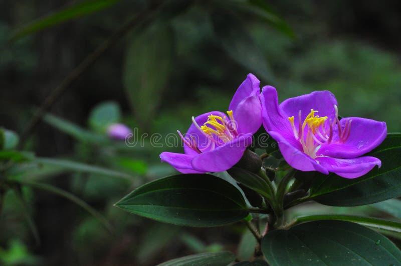 Landskap av blommor på bergen och skogarna arkivfoton