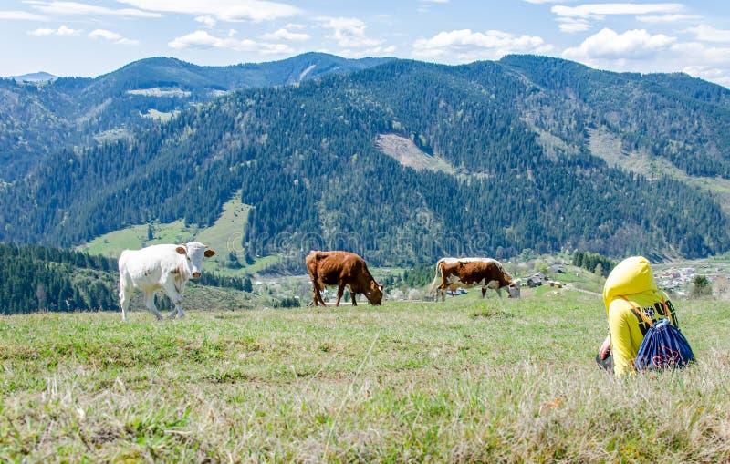 Landskap av Carpathians berg royaltyfri foto